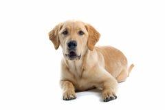 Perro de reclinación Fotografía de archivo