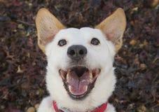 Perro de risa Fotografía de archivo libre de regalías