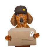 Perro de salchicha del perro basset de la entrega de los posts foto de archivo libre de regalías