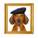 Perro de salchicha francés imagen de archivo