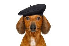 Perro de salchicha francés foto de archivo libre de regalías