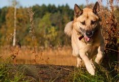 Perro de salto Imagen de archivo