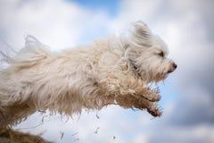 Perro de salto Fotografía de archivo