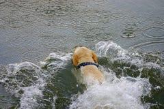 Perro de salto Imagenes de archivo