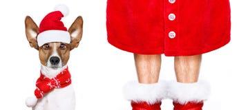 Perro de Santa Claus de la Navidad Fotos de archivo libres de regalías