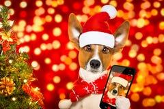 Perro de Santa Claus de la Navidad Imagen de archivo