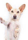 Perro de Selfie fotos de archivo