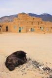 Perro de Taos Imagen de archivo libre de regalías