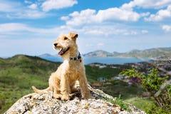 Perro de Terrier en las montañas en un fondo del cielo Imagen de archivo
