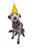 Perro de Terrier que lleva el sombrero amarillo del partido Imagen de archivo libre de regalías