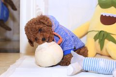 Perro de tres meses del peluche Foto de archivo libre de regalías
