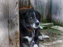 Perro de yarda Fotografía de archivo