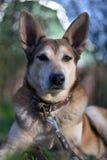Perro de yarda que guarda el primer Fotografía de archivo libre de regalías