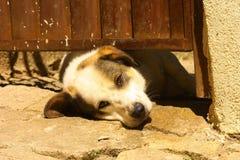 Perro debajo de la puerta Foto de archivo libre de regalías