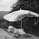 Perro debajo del paraguas Fotografía de archivo libre de regalías