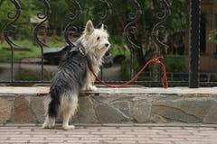 Perro dedicado Fotos de archivo