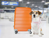 Perro del aeropuerto Fotos de archivo