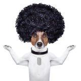 Perro del Afro Fotografía de archivo libre de regalías