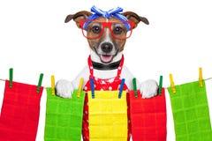 Perro del ama de casa Imágenes de archivo libres de regalías