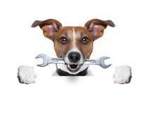Perro del artesano Imagenes de archivo