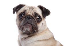 Perro del barro amasado fotos de archivo