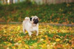 Perro del barro amasado lindo Fotografía de archivo libre de regalías
