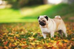 Perro del barro amasado lindo Fotografía de archivo