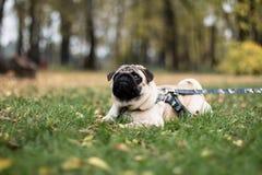 Perro del barro amasado que pone en la hierba Imagenes de archivo