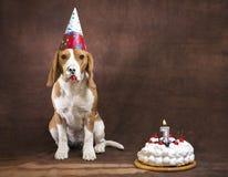 Perro del beagle Foto de archivo