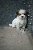 Perro del bebé Imagenes de archivo