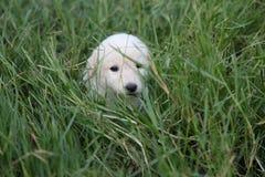 Perro del bebé Fotografía de archivo libre de regalías