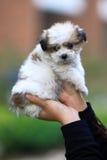 Perro del bebé en las manos Imagenes de archivo