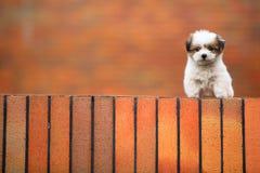 Perro del bebé Fotos de archivo libres de regalías