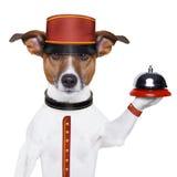 Perro del botones Fotos de archivo