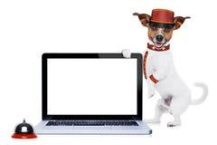 Perro del botones Imágenes de archivo libres de regalías