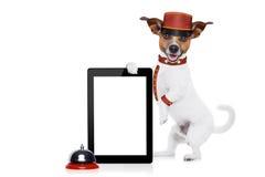 Perro del botones Fotografía de archivo libre de regalías