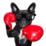 Perro del boxeo fotografía de archivo