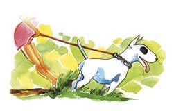 Perro del Bullterrier en caminata Imágenes de archivo libres de regalías
