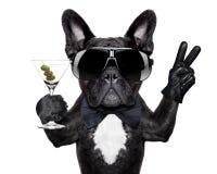 Perro del cóctel de la paz Fotografía de archivo