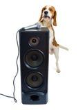 Perro del canto foto de archivo libre de regalías