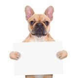 Perro del cartel de la bandera Fotografía de archivo