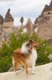 Perro del collie en cappadocia Fotos de archivo libres de regalías