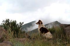 Perro del collie en las montañas brumosas de Drakensberg Imagen de archivo