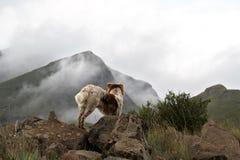 Perro del collie en las montañas brumosas de Drakensberg Fotografía de archivo libre de regalías