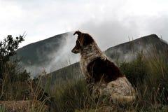 Perro del collie en las montañas brumosas de Drakensberg Fotos de archivo libres de regalías