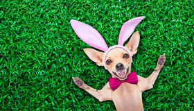 Perro del conejito del huevo de Pascua Foto de archivo libre de regalías