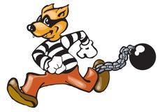 Perro del Convict Imágenes de archivo libres de regalías