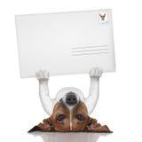 Perro del correo Imagen de archivo libre de regalías