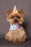 Perro del cumpleaños Fotografía de archivo libre de regalías