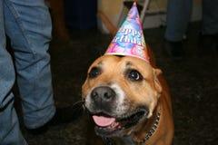 Perro del cumpleaños Imagenes de archivo